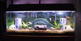 Cool Fish Bowl Decorations Transform the Way Your Home Looks Using a Fish Tank Aquarium 2