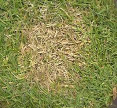 Dollar Spot Disease Pitchcare Articles