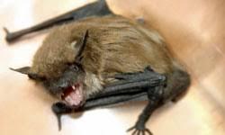 how rabies works howstuffworks