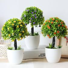 Top MOst Beautiful Exterior Decorative House Plants Cheap Modern Home