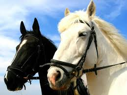 Картинки по запросу zirgi