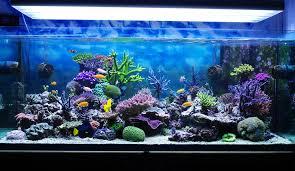 Beleuchtung Für Aquarien Und Terrarien
