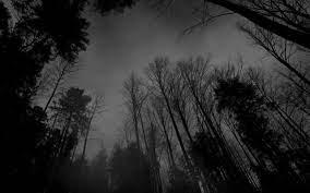 Dark Forest Wallpaper Desktop ...
