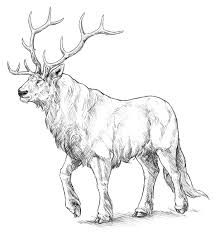 deer with step by step drawing lesson 600x656 how to draw creatively using photo references