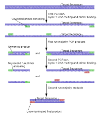 Nested Polymerase Chain Reaction Wikipedia