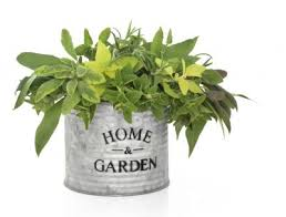 planting in galvanized steel containers