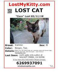 Lost Cat Flyer Lost And Found Animals