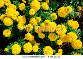 Spring Flower Garden Stock Images Royalty Free Images Vectors