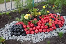 garden decorations. Plastic-bottles-crafts-ideas-garden-ladybug-tegetes-flowers Garden Decorations