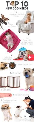 prepare for your new puppy did you get a puppy for what do you need infographic