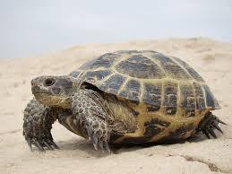 черепаха символ чего по фен шуй тату синяя в россии китае