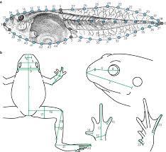 Macroevolutionary Patterns Interesting Design Ideas