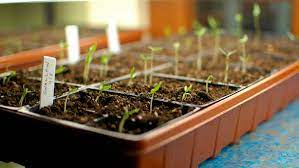 flower or vegetable garden from seeds
