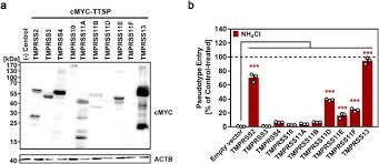 Protease inhibitor cocktails and tablets target serine, cysteine, and aspartic acid proteases, and aminopeptidases. Camostat Mesylate Inhibits Sars Cov 2 Activation By Tmprss2 Related Proteases And Its Metabolite Gbpa Exerts Antiviral Activity Ebiomedicine
