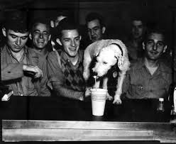 flashback fotos sideways the sweetheart of tech here s how we told the darling dog s tale tail in our 1946 photo