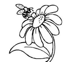 Small Picture Daisy Flower Coloring Pages Texas Hill Country Wildflower