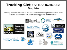 Tracking Clet - the lone bottlenose dolphin