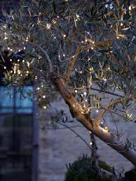 garden outdoor lighting. wind outdoor fairy lights around garden trees and bushes for a magical effect lighting