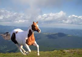 wild horses running wallpaper. WildHorseRunning In Wild Horses Running Wallpaper