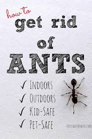 Little Black Ants In Kitchen How To Get Rid Of Ants And Keep Them Away For Good