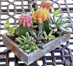 29 cutest planter ideas for succulents