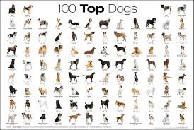 A Chart Of The Top 100 Dog Breeds Album On Imgur