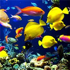 3d fish wallpaper. Exellent Fish With 3d Fish Wallpaper P