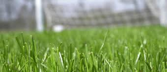 grass soccer field with goal. Grass Soccer Field With Goal
