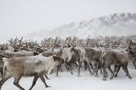 """Résultat de recherche d'images pour """"les rennes"""""""