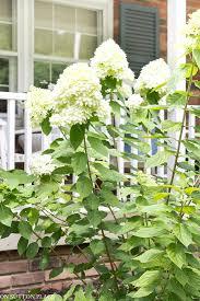 blue white flower garden ideas on