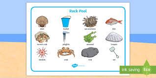 Pool Word Seaside Rock Pool Word Mat Seaside Beach Seaside Word Mat