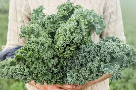 Kale Companion Planting Chart Fruitions Guide To Companion Planting