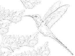 Swallow Bird Coloring Pages Realistic Humming Hummingbird Col Small