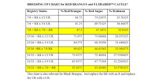 Angus Weight Chart Breeding Up Ultrablack Ultrared Brangus