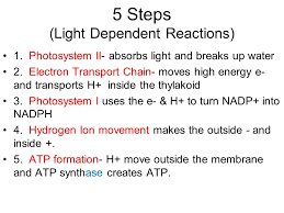 5 steps light dependent reactions
