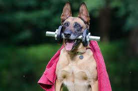 Image result for exercise with your dog
