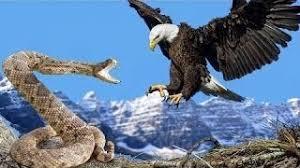 鷹とコブラ