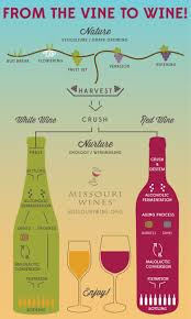 wine aging chart the 25 best wine education ideas on pinterest wine facts wine
