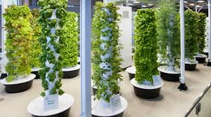 hydroponics garden. O\u0027Hare International Airport \u0027Tower Garden\u0027 Feeds Over 10,000 Hungry Travellers A Year! Hydroponics Garden V