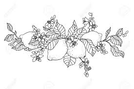Lemon Tree In Tattoo Style Image Light Little Flowers With Fruits