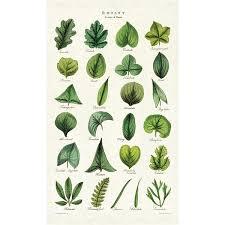 Botany Leaves Tea Towel