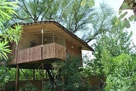 tree house jaipur. The Tree House Resort, Jaipur