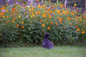 Wildflower Garden Design New Low Maintenance Landscaping With Wildflowers American Meadows Blog