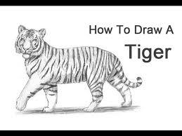 easy tiger pencil drawing. Plain Pencil Inside Easy Tiger Pencil Drawing S
