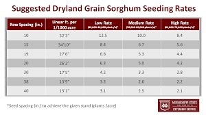 Seeding Rates And Other Grain Sorghum Planting Tips