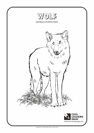 Small Picture Coloring Pages Animals Skunk Coloring Pages To Print Mammal