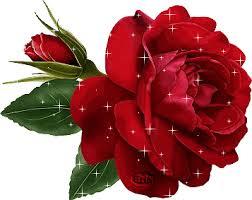 Resultado de imagen para rosa roja gif