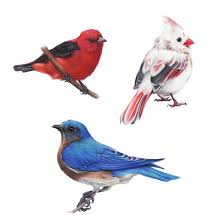 cute bird drawing tumblr. Exellent Drawing Birds Tumblr Drawing For Kids And Cute Bird I