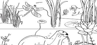 Otter Kleurplaat Natuurmonumenten