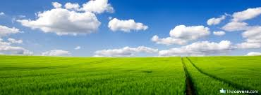 Green grass and blue sky Facebook Covers